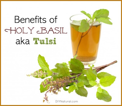 Tulsi-and-Holy-Basil-Benefits-660x570
