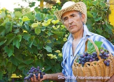 wine-farmer-italy