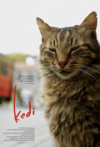 Kedi: Top Film on Istanbul's Cat Dining