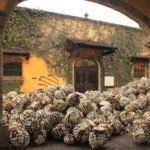 Julio Cuervo Tequila: Improving with each Next Generation